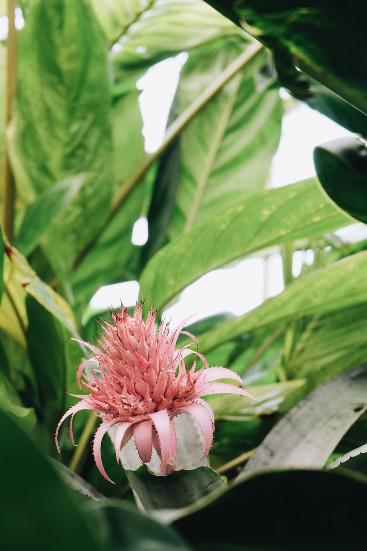 tilt shift lens photography of pink flower