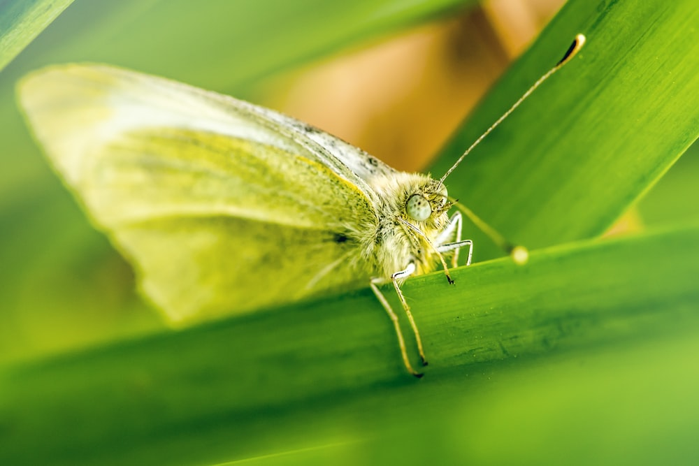 brown butterfly perch on green plant