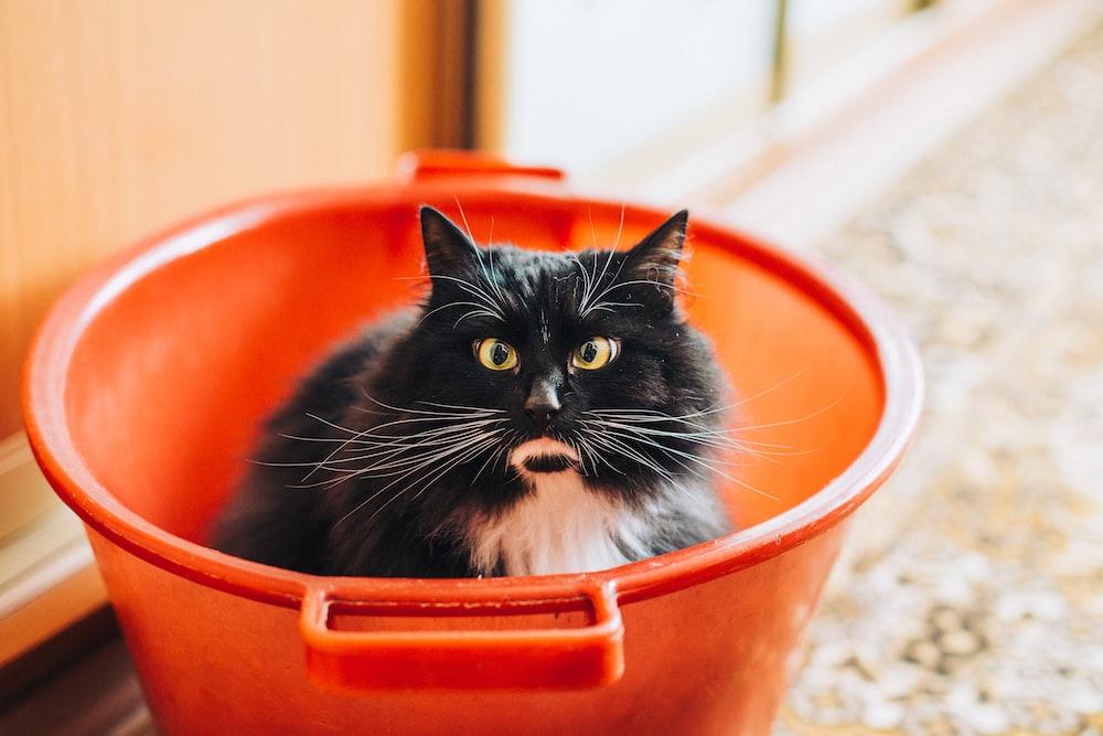 tuxedo cat inside bucket
