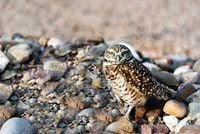 brown owl perched on rocks during daytime