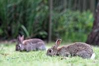 rabbits x 2