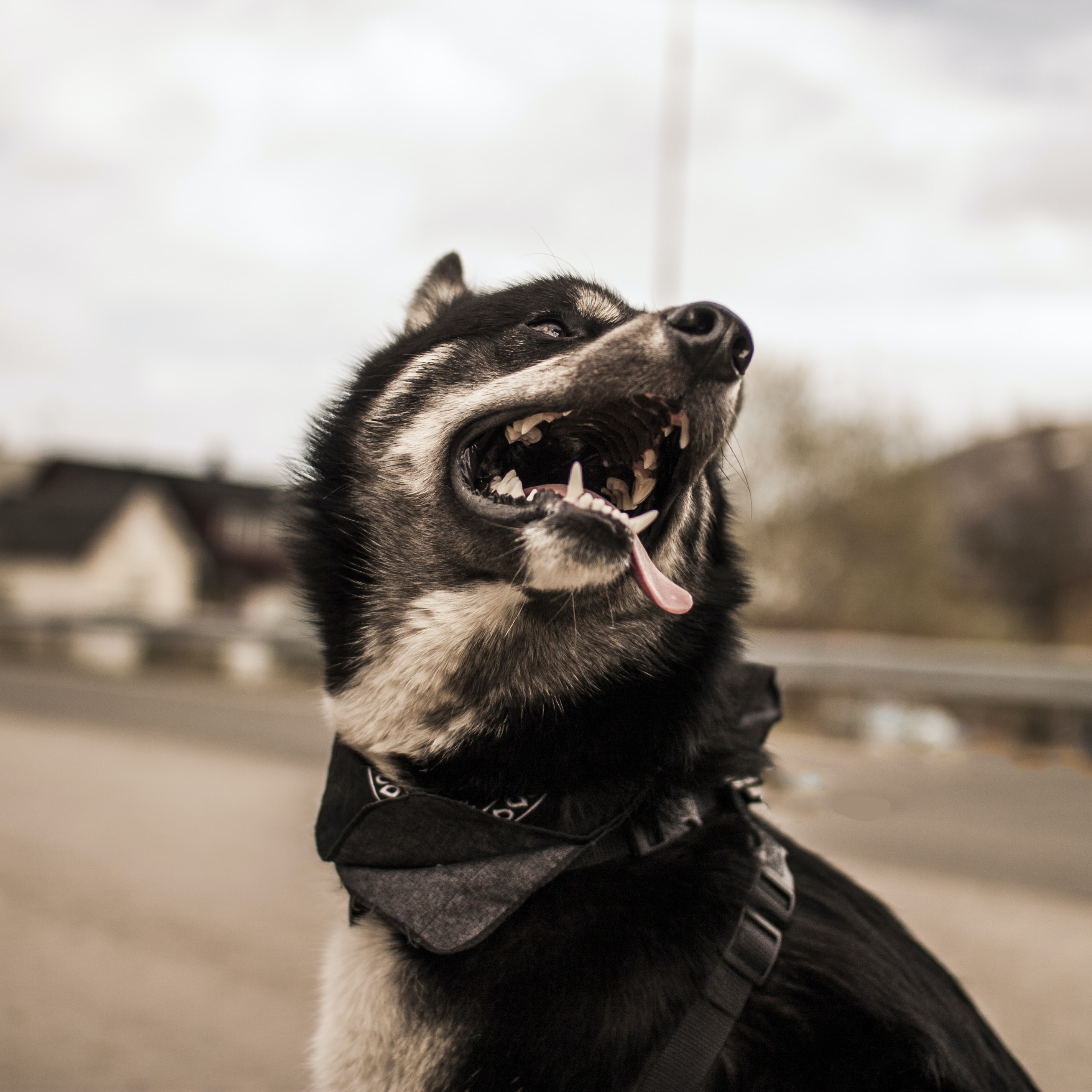 black and white dog focus photography