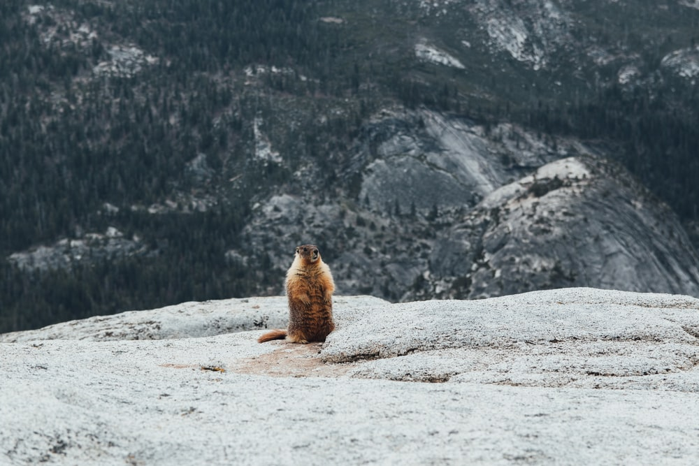 squirrel on gray mountain