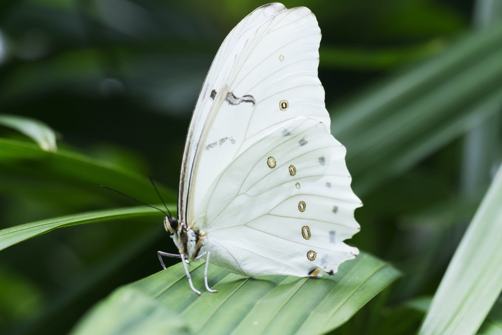 white butterfly on green leafed plant
