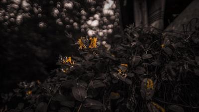 4781. Virágok