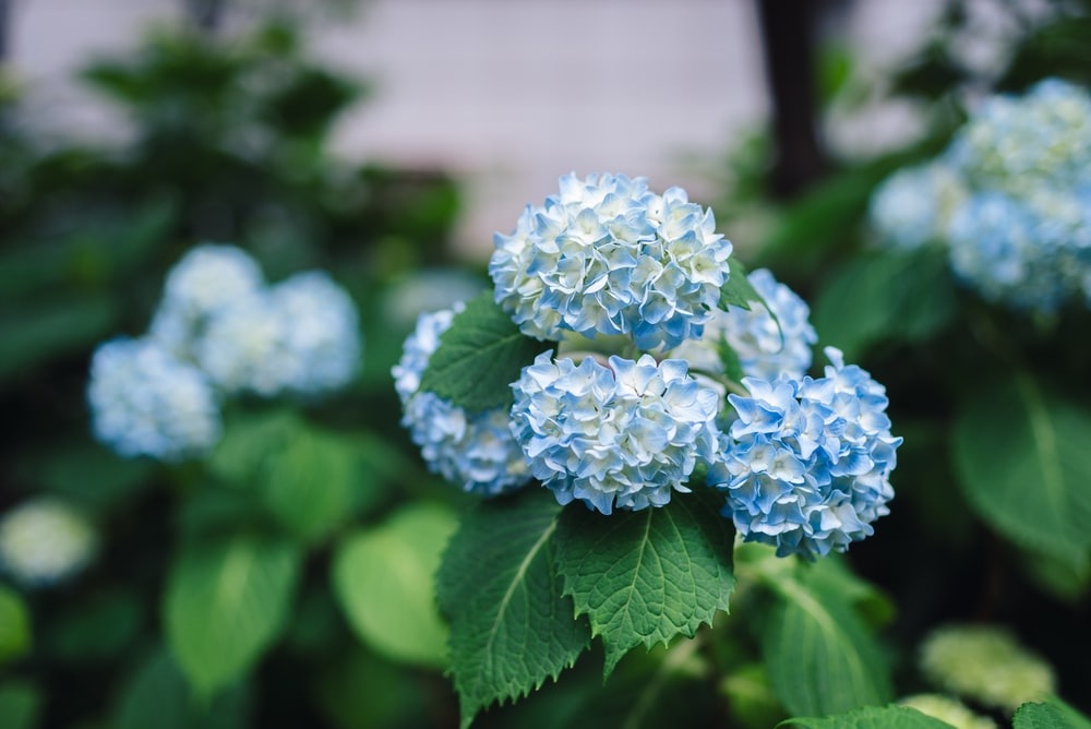 blue flowers in plants