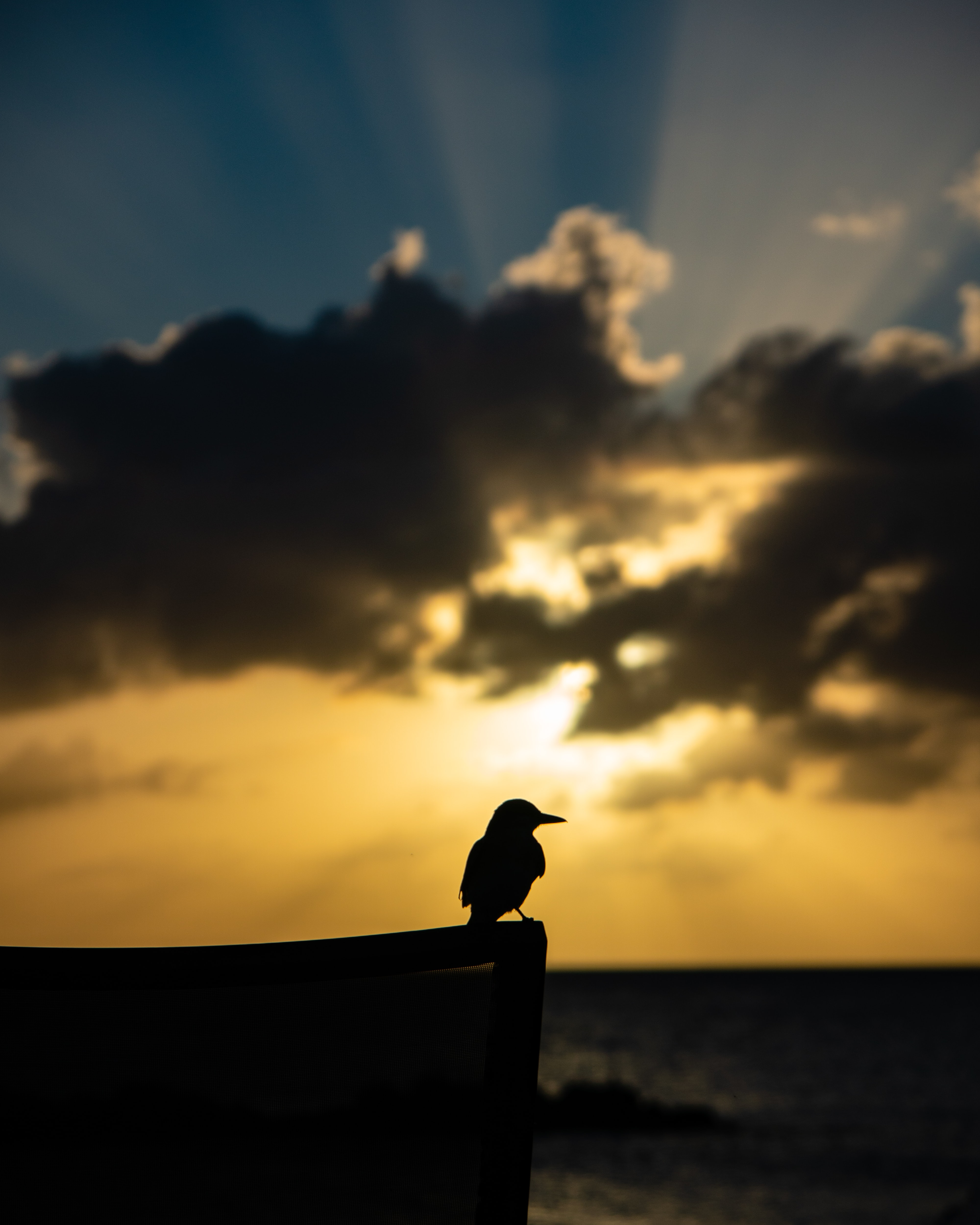 silhouette of bird during daytime