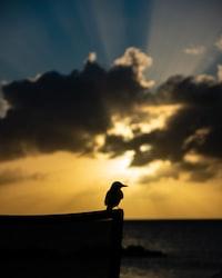 silhouette of bird during daytime