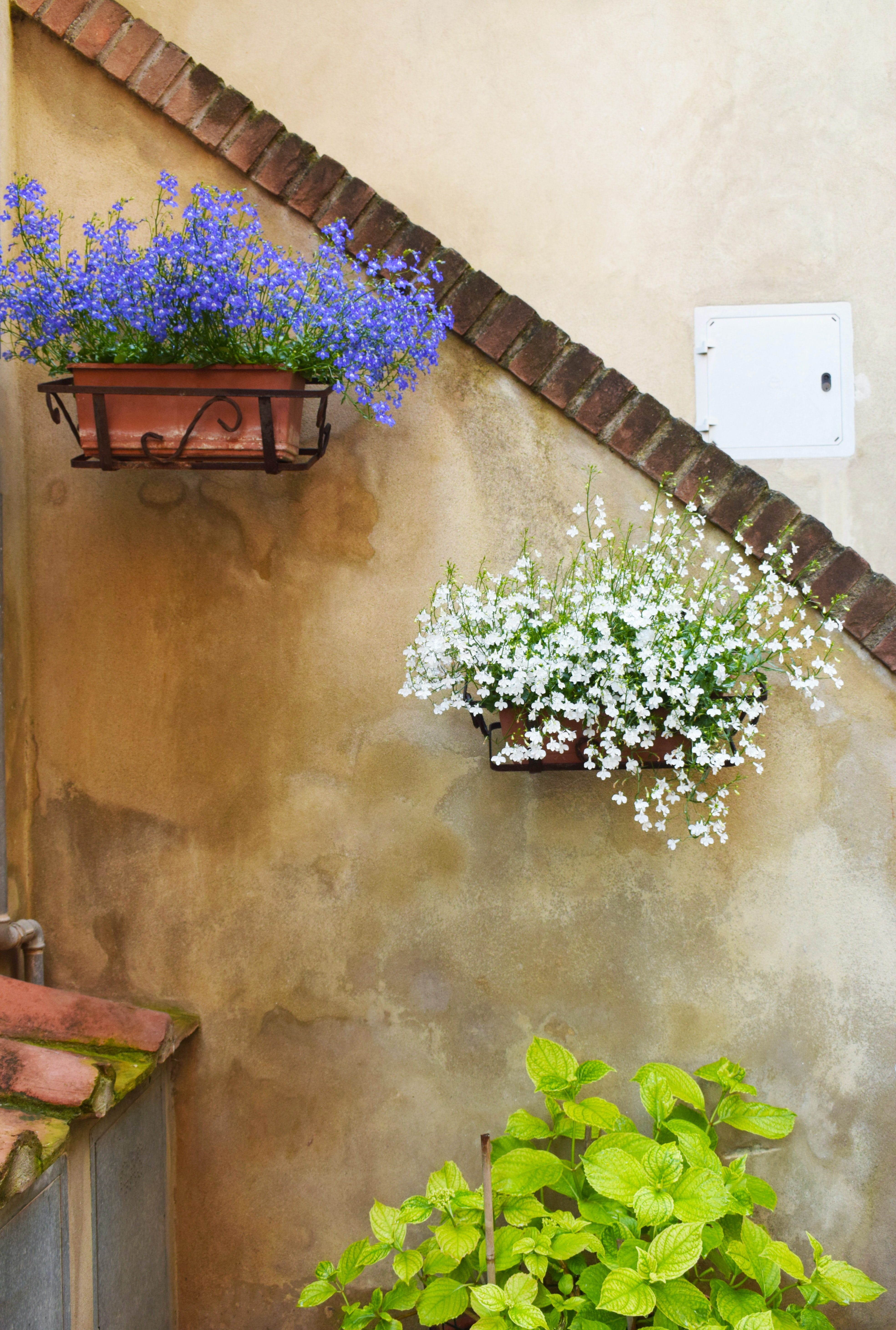 two blue and white petaled flower hanged on wall