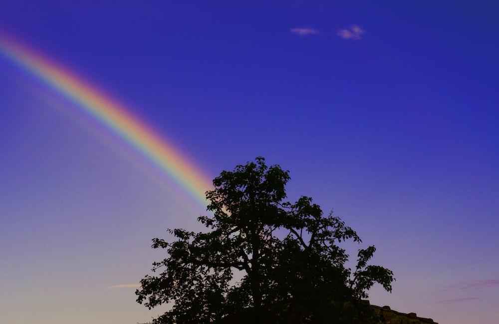 black tree under rainbow and blue sky