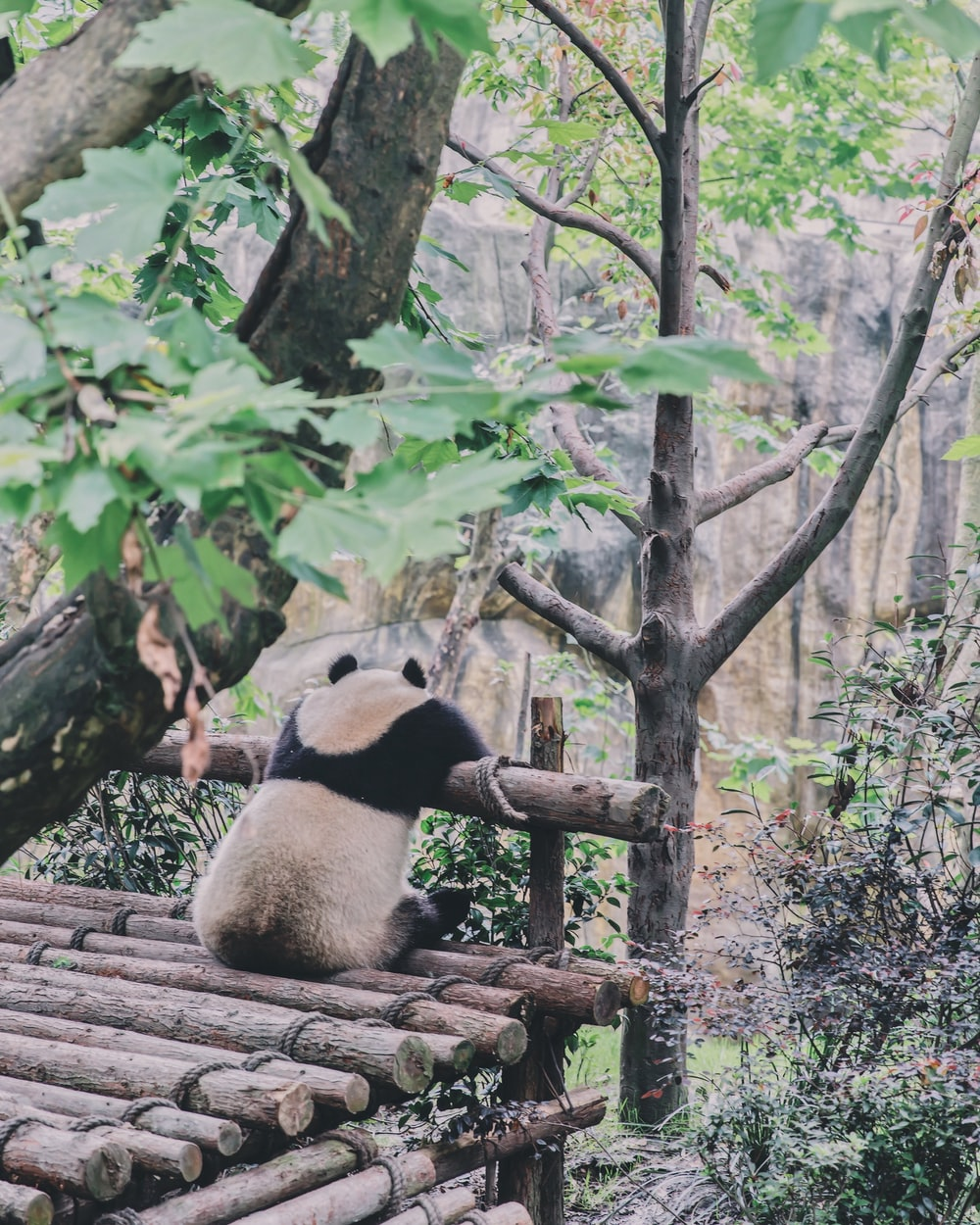 panda sitting on trunk forest