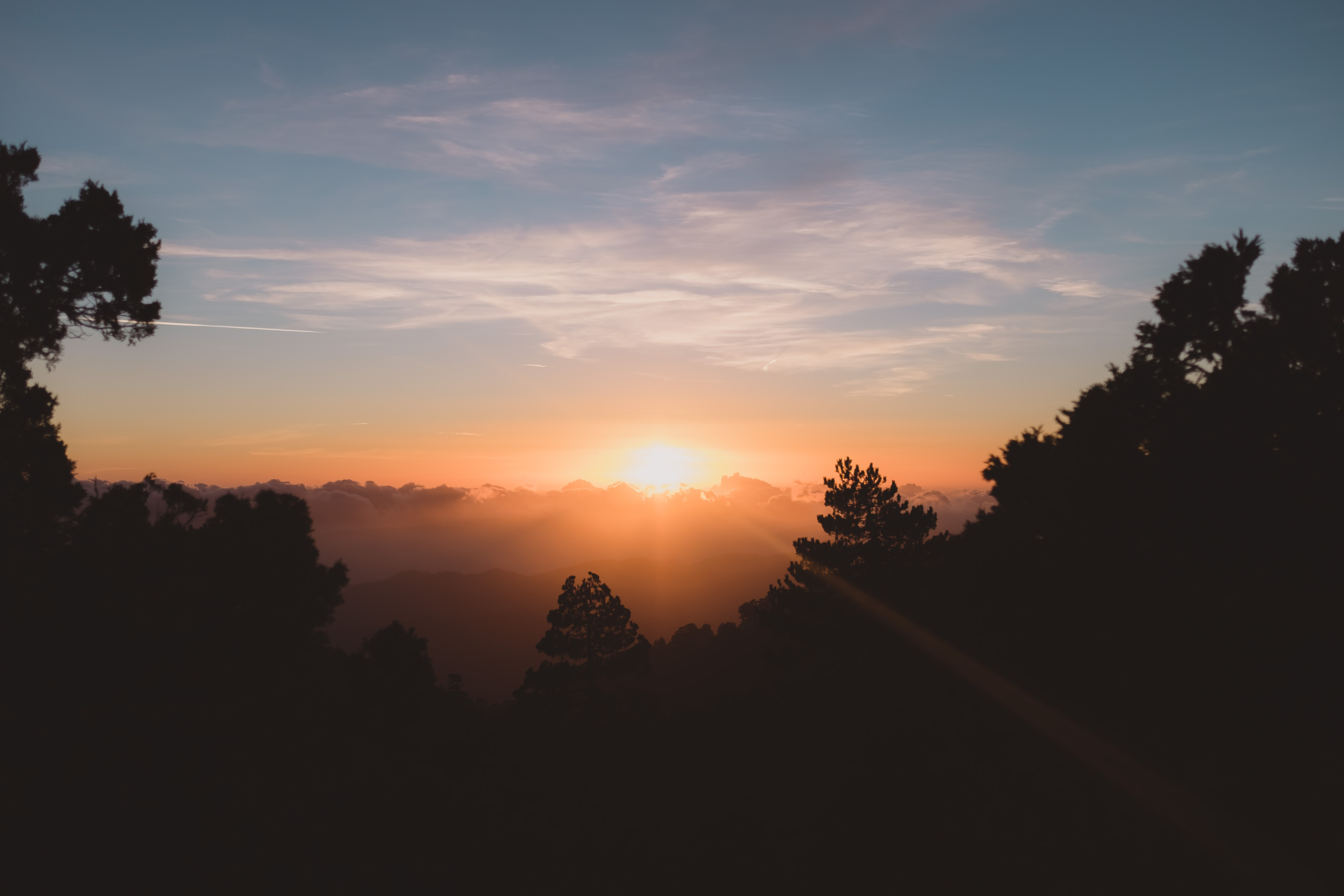 silhouette of trees in front of sunrise