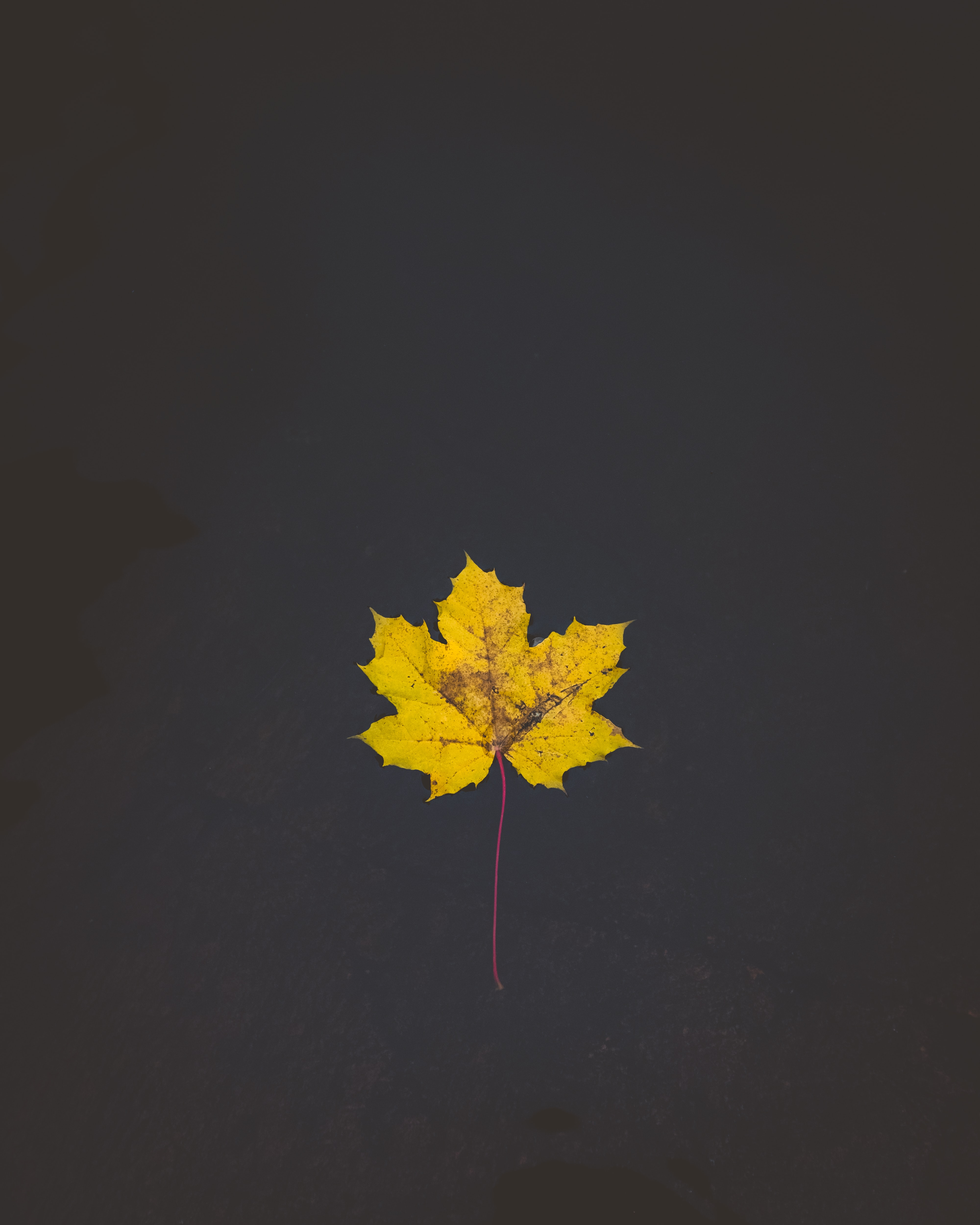 yellow maple leaf on body of water