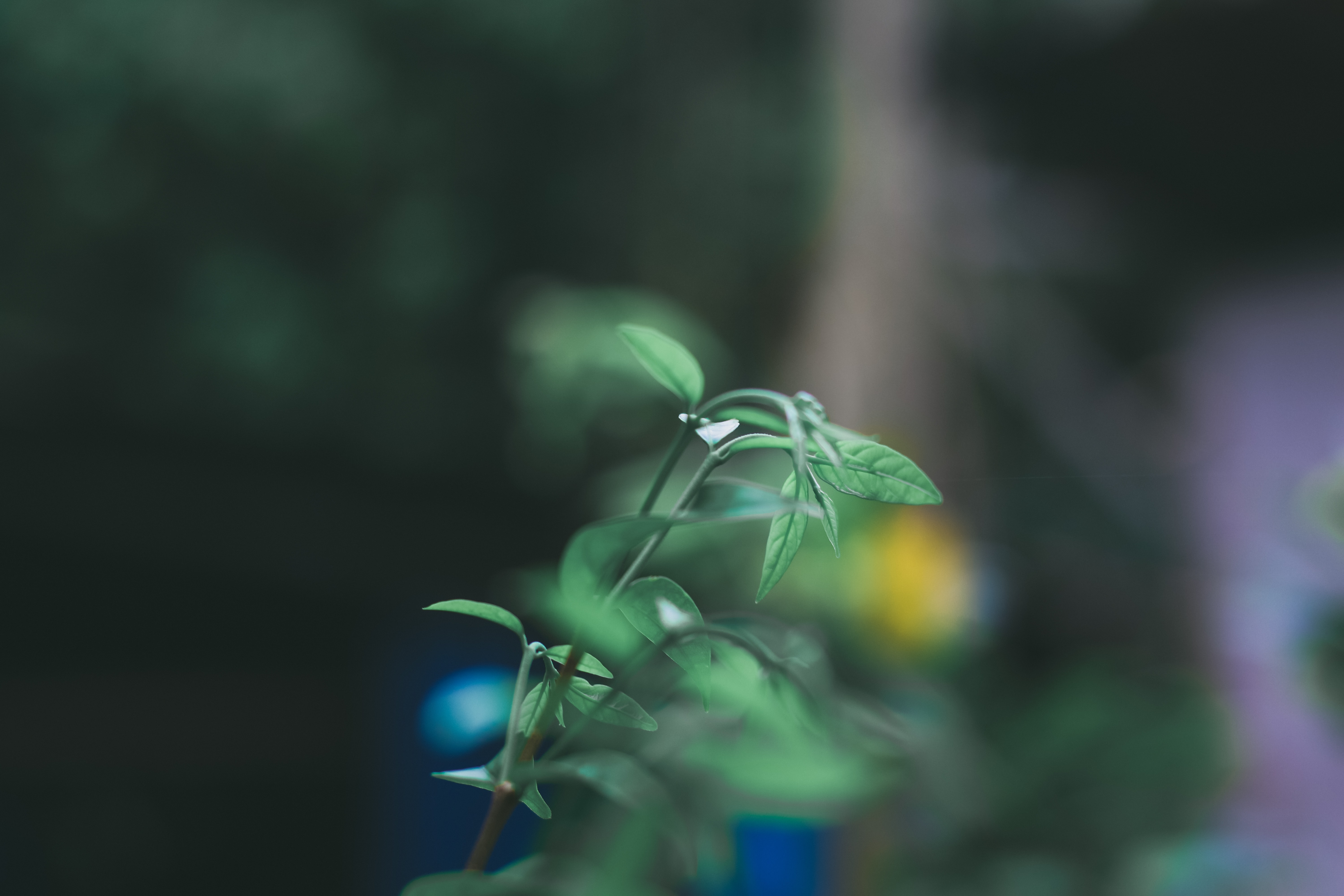 closeup photo of green leafed plant