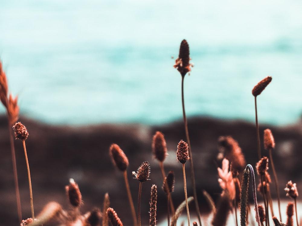 tilt shift photography of brown grass