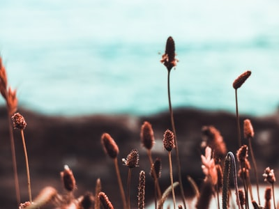tilt shift photography of brown grass fauna zoom background