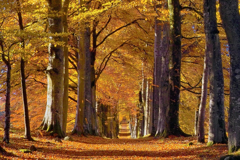 yellow leafed trees during daytime