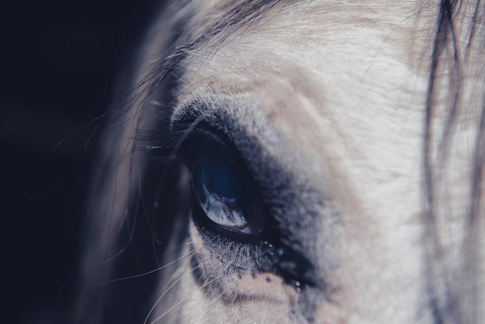 close-up photography of animal eye