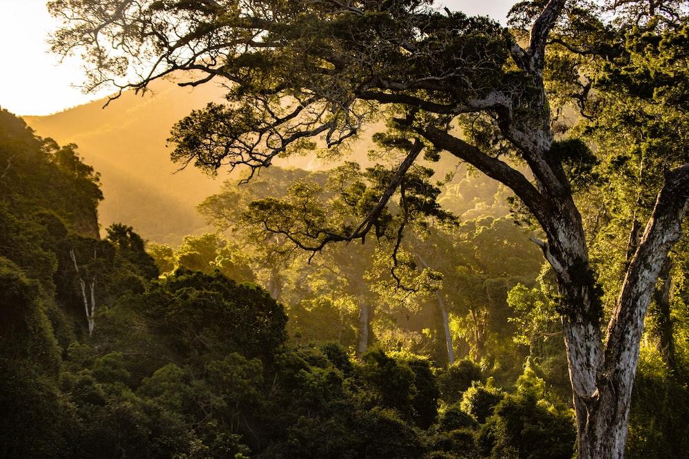Download gambar Pohon dengan Bayangan