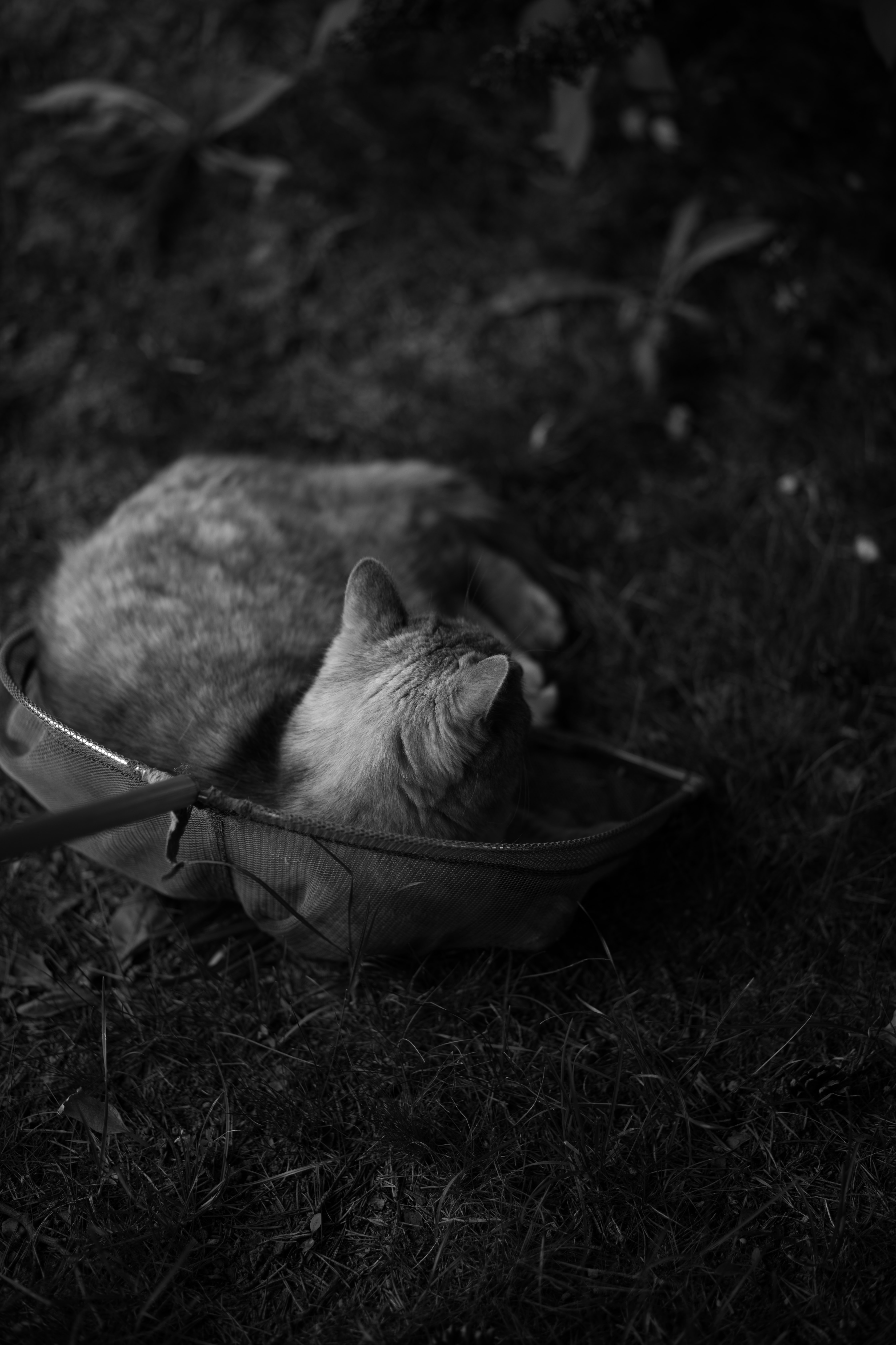 grayscale cat laying on net