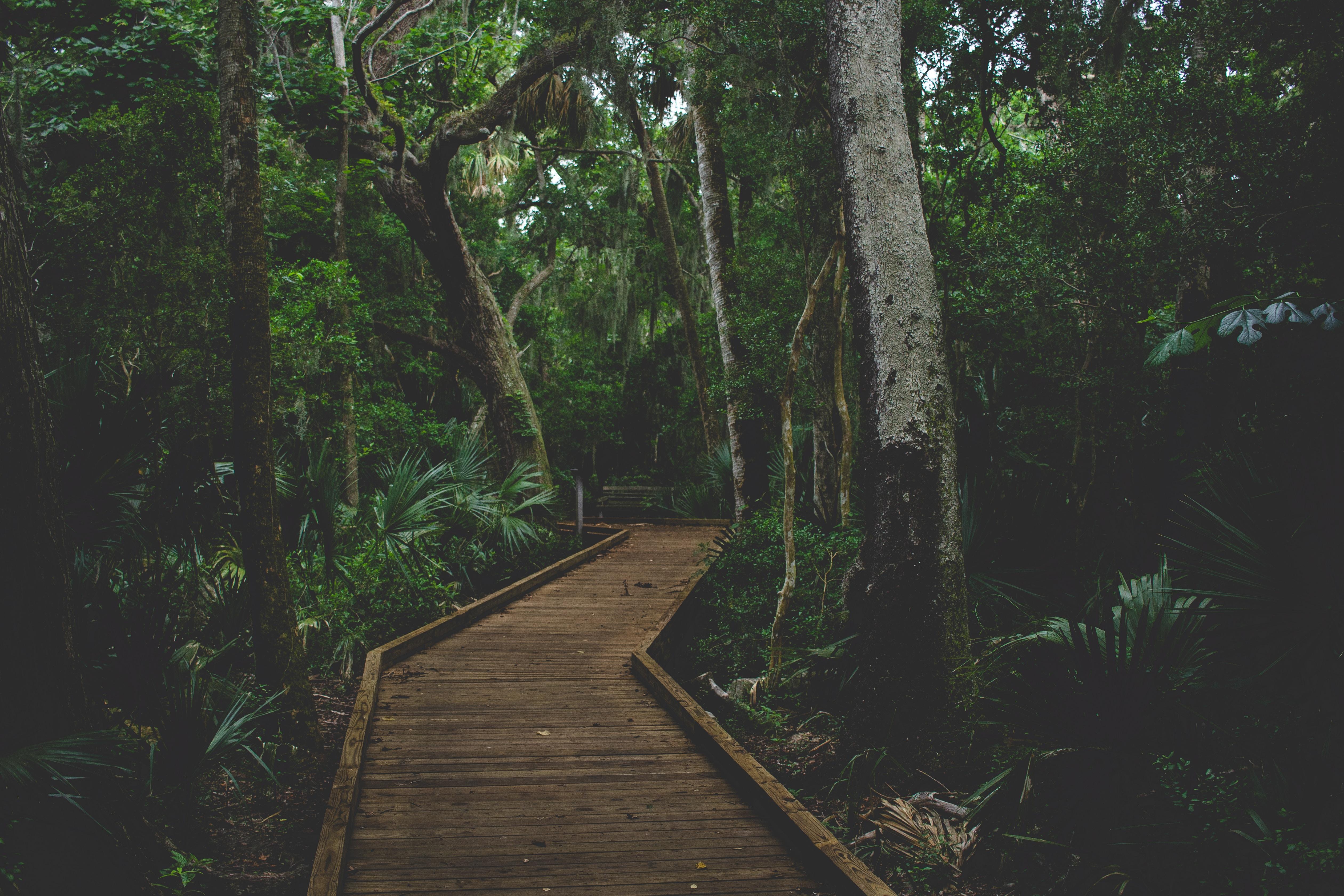 brown wooden path between trees