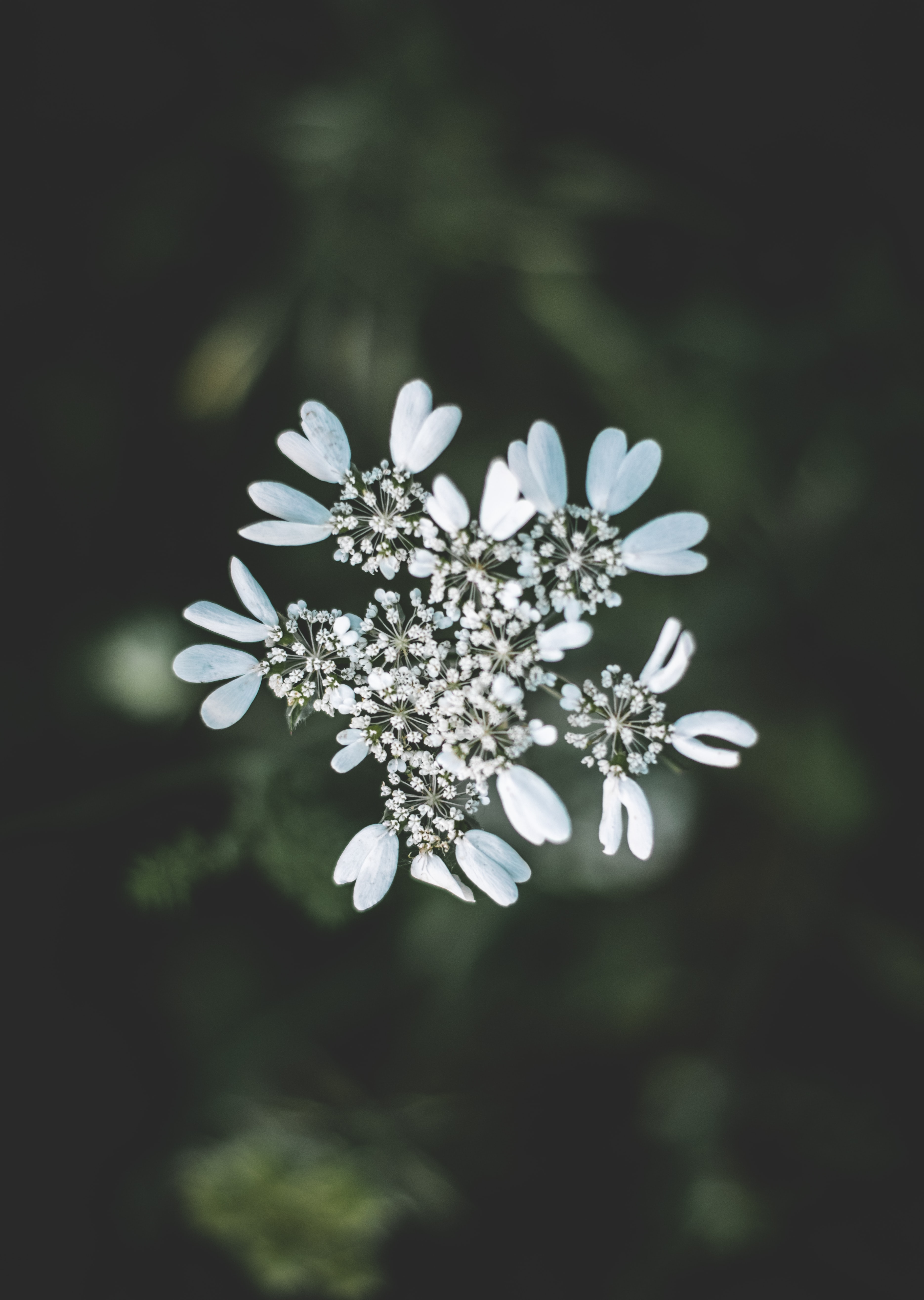 selective focus photography of white petaled flower