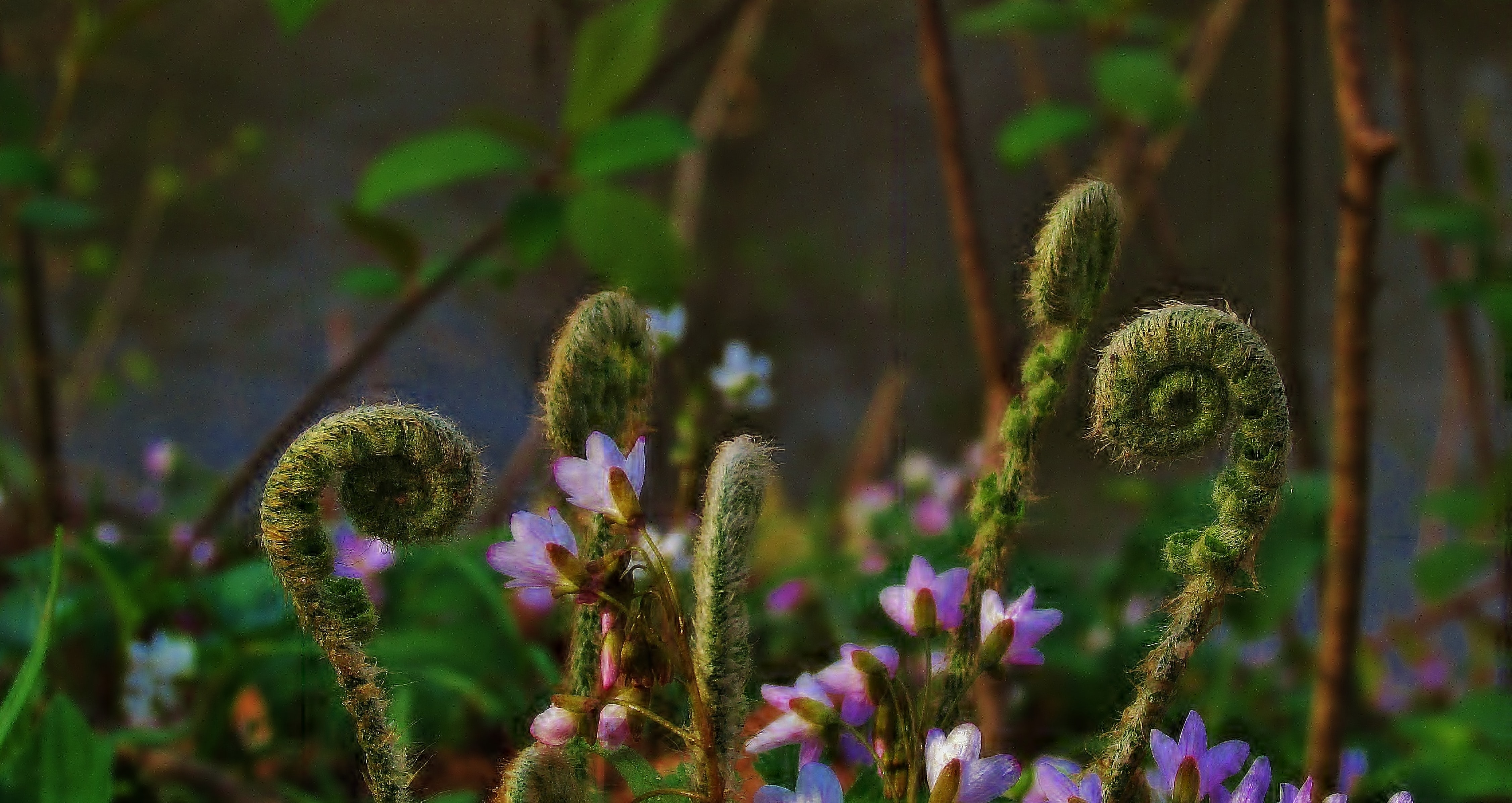 purple flower on field
