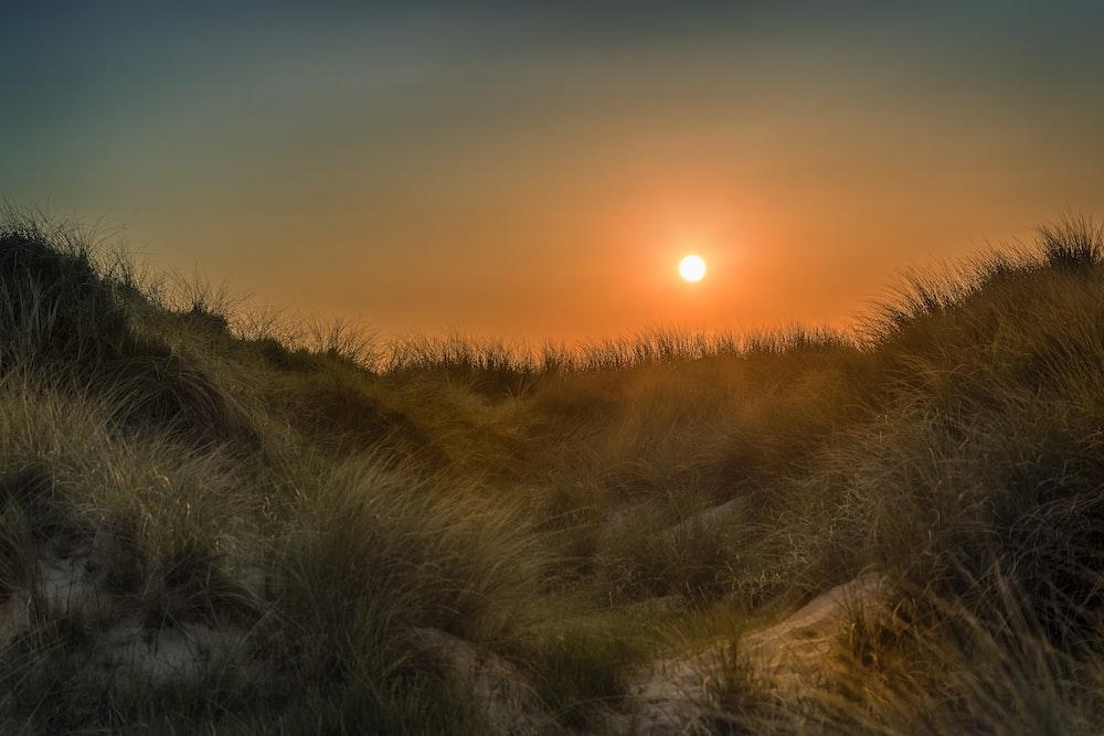 green grass field during golden hour