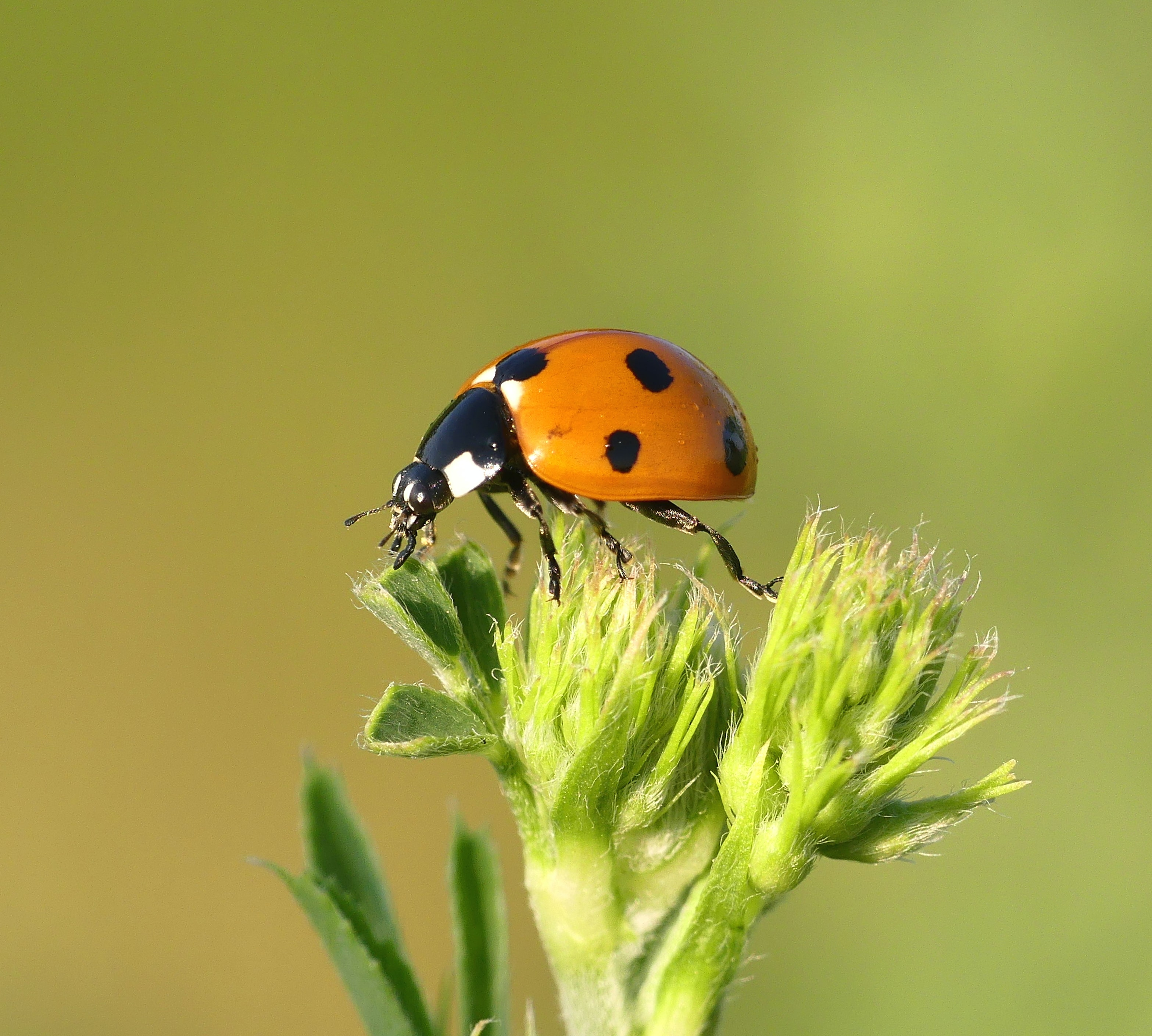 macro photography of orange and black bug perching on plant