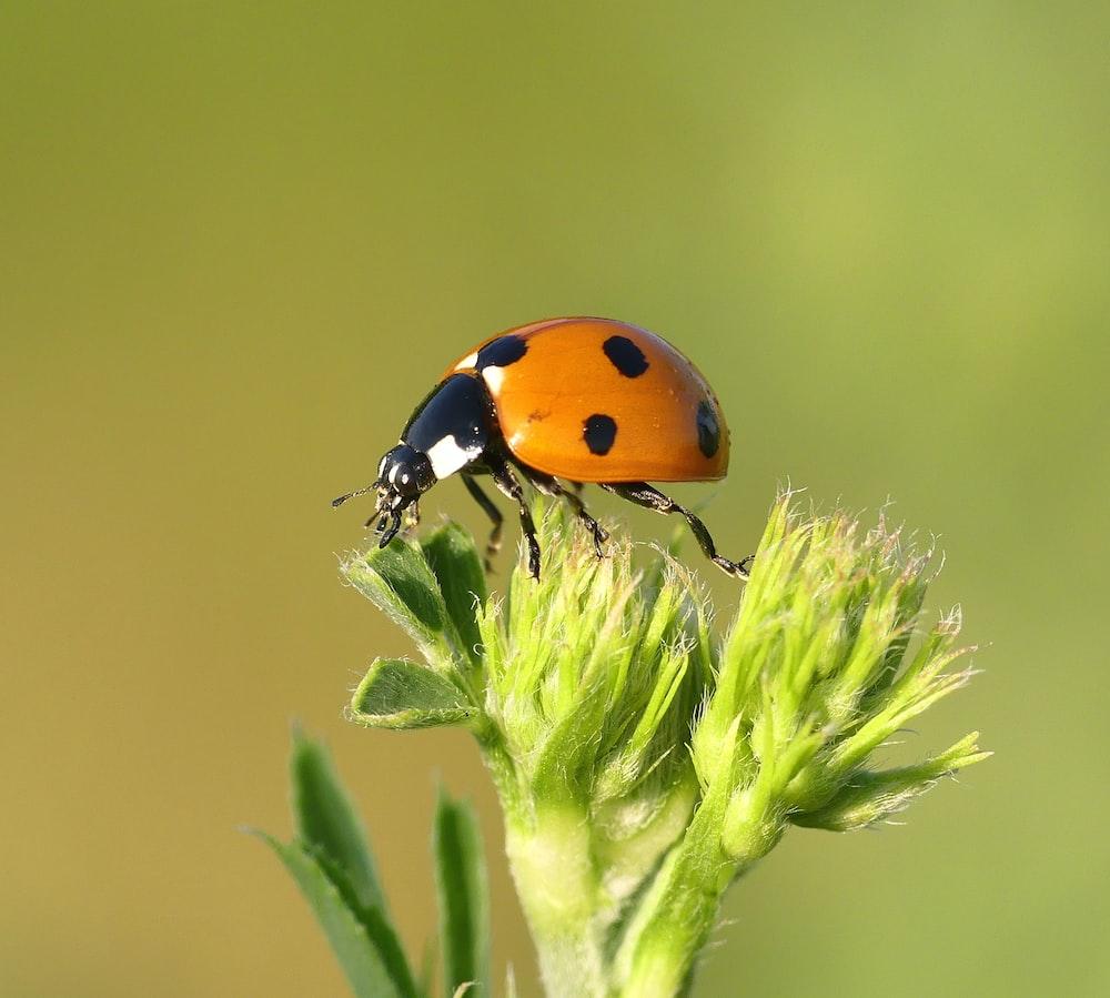 macro photography of orange and black bug perching on plant