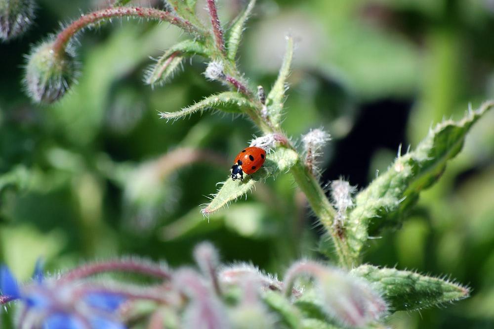 tilt-shit photography of ladybug on green leaf