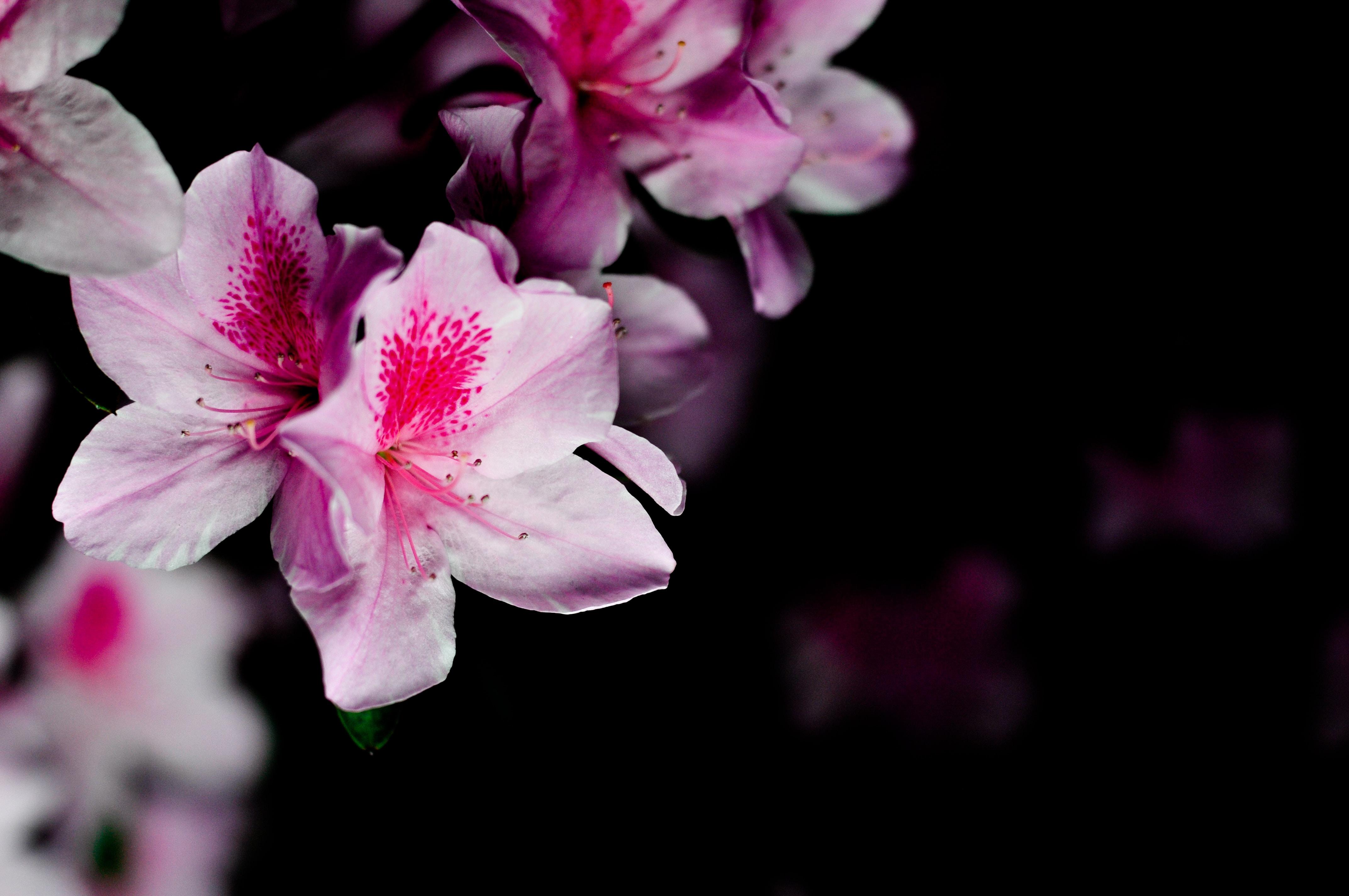 tilt shift photography of pink flower