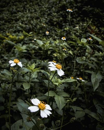 3982. Virágok