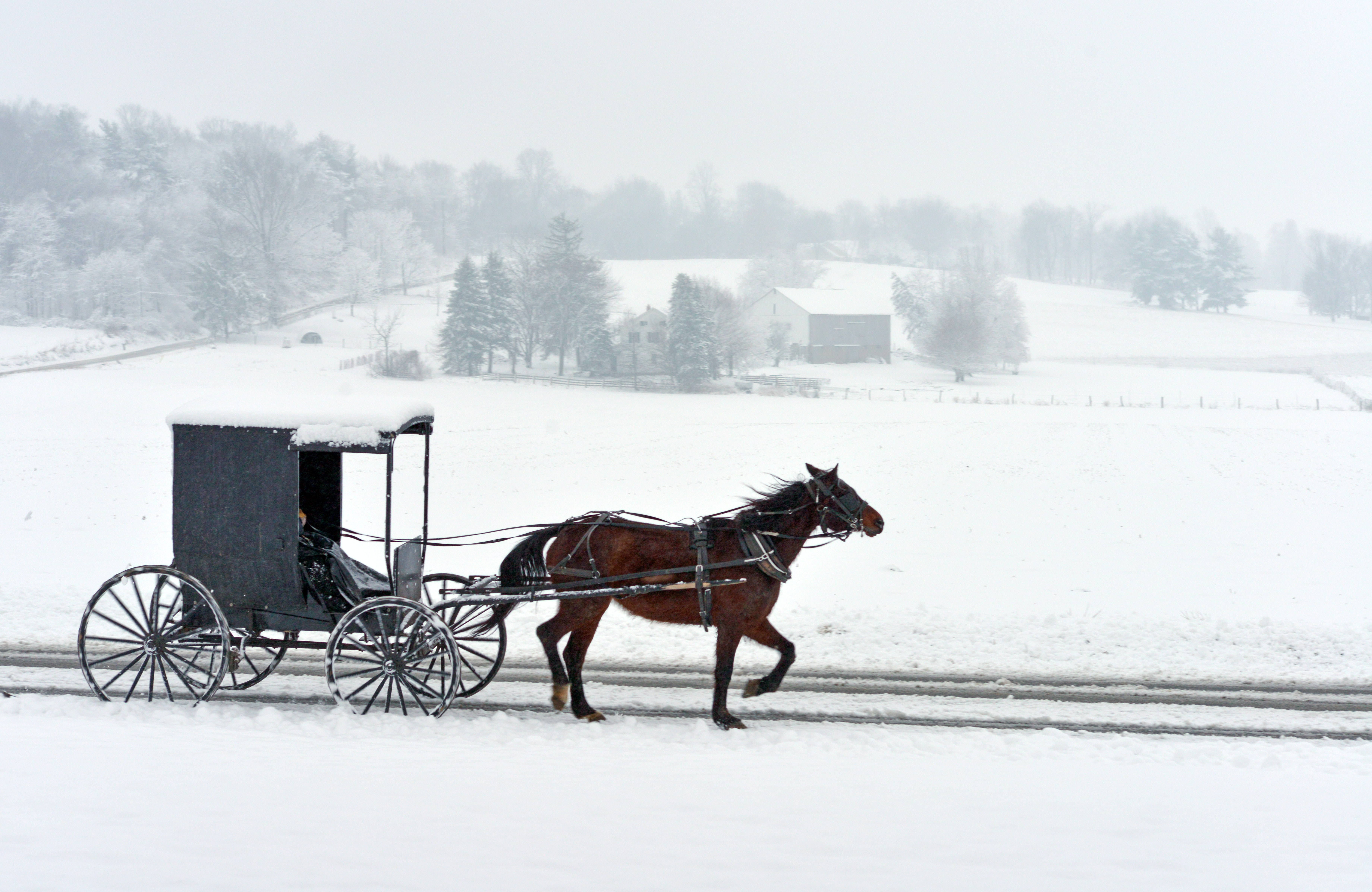 carriage travelling on snow