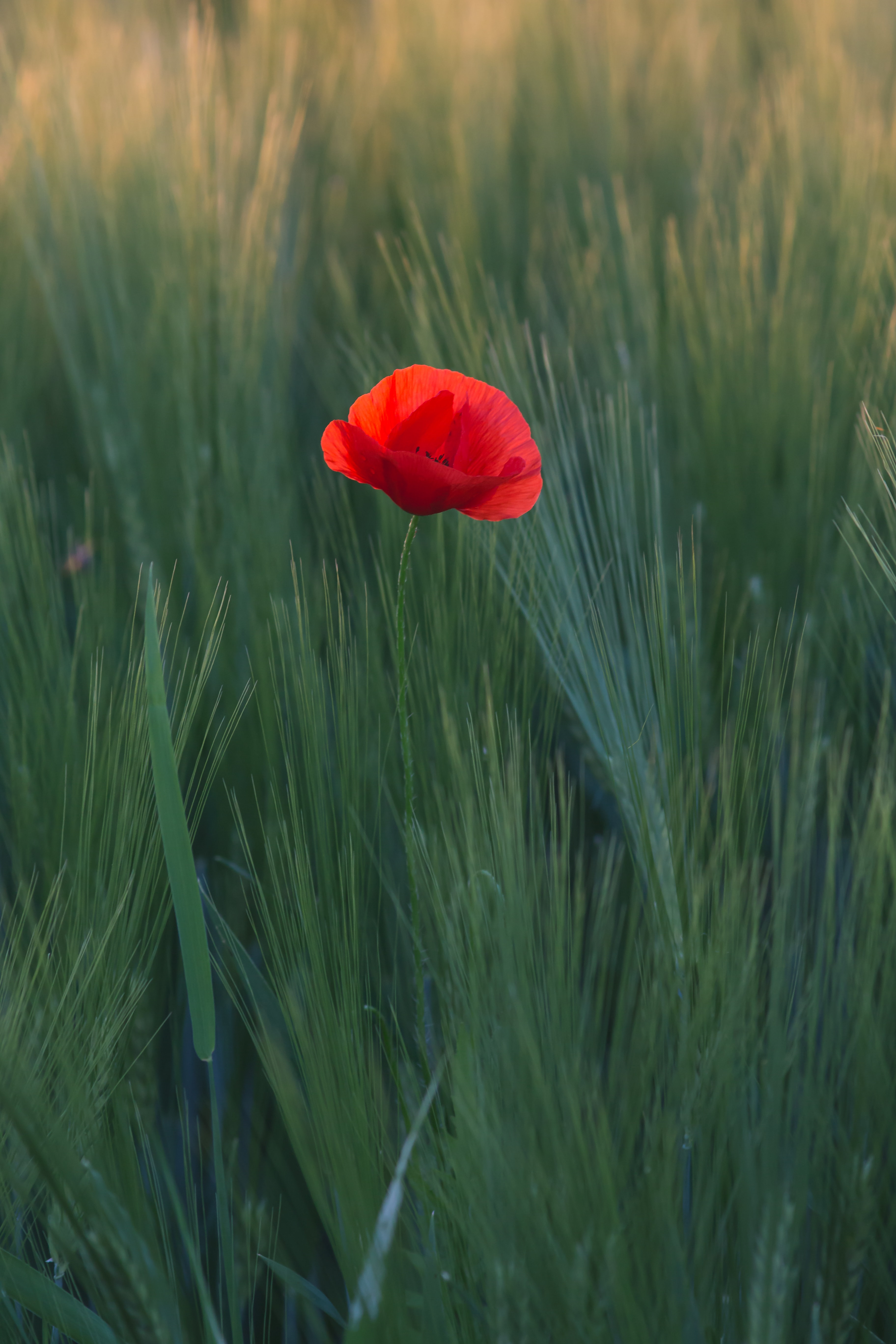 red flower in the middle of green grasses