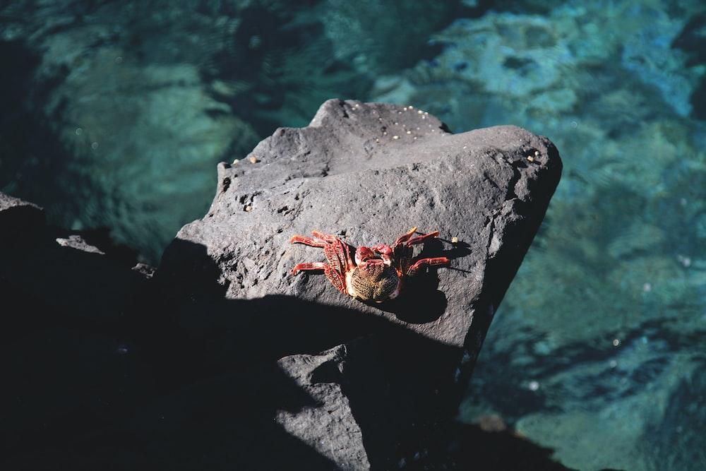 crab on seacliff