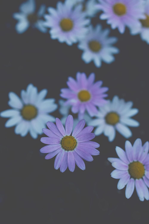 Marguerite Pictures Download Free Images On Unsplash