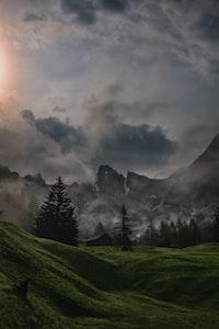 pine trees near rocky mountain