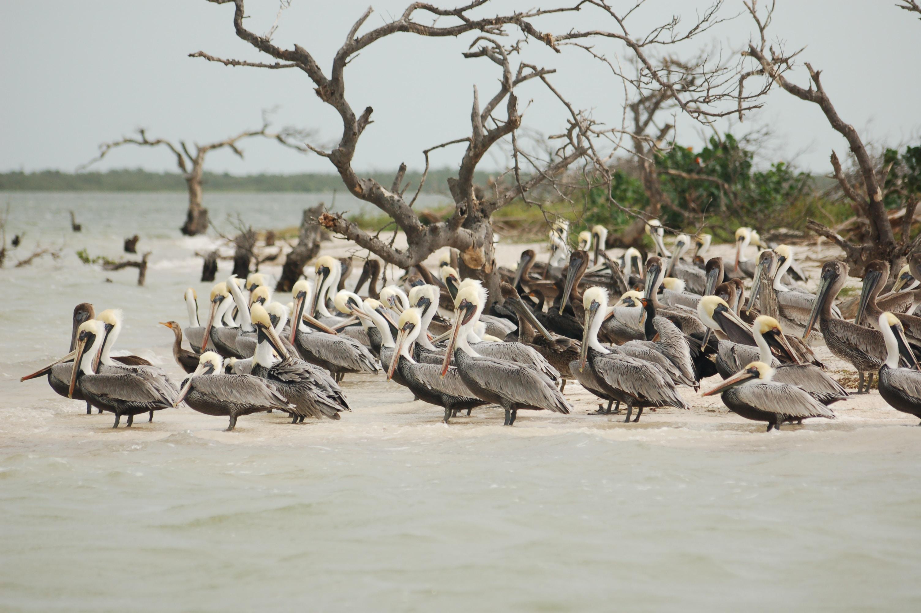 flock of birds on seashore