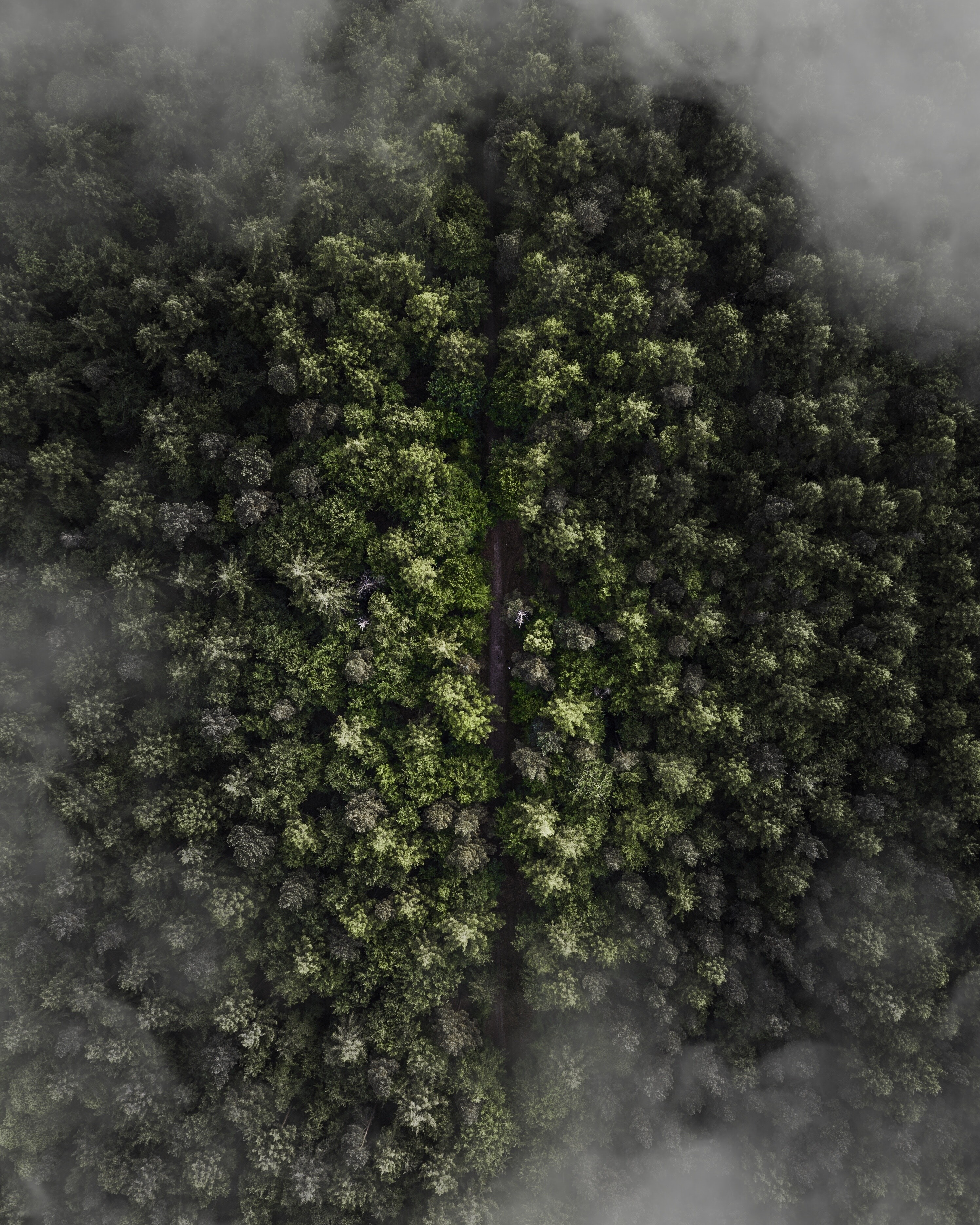 aerial photo of a green leaf trees