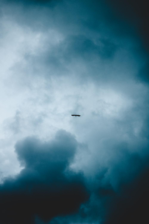 silhouette of bird under gray skies