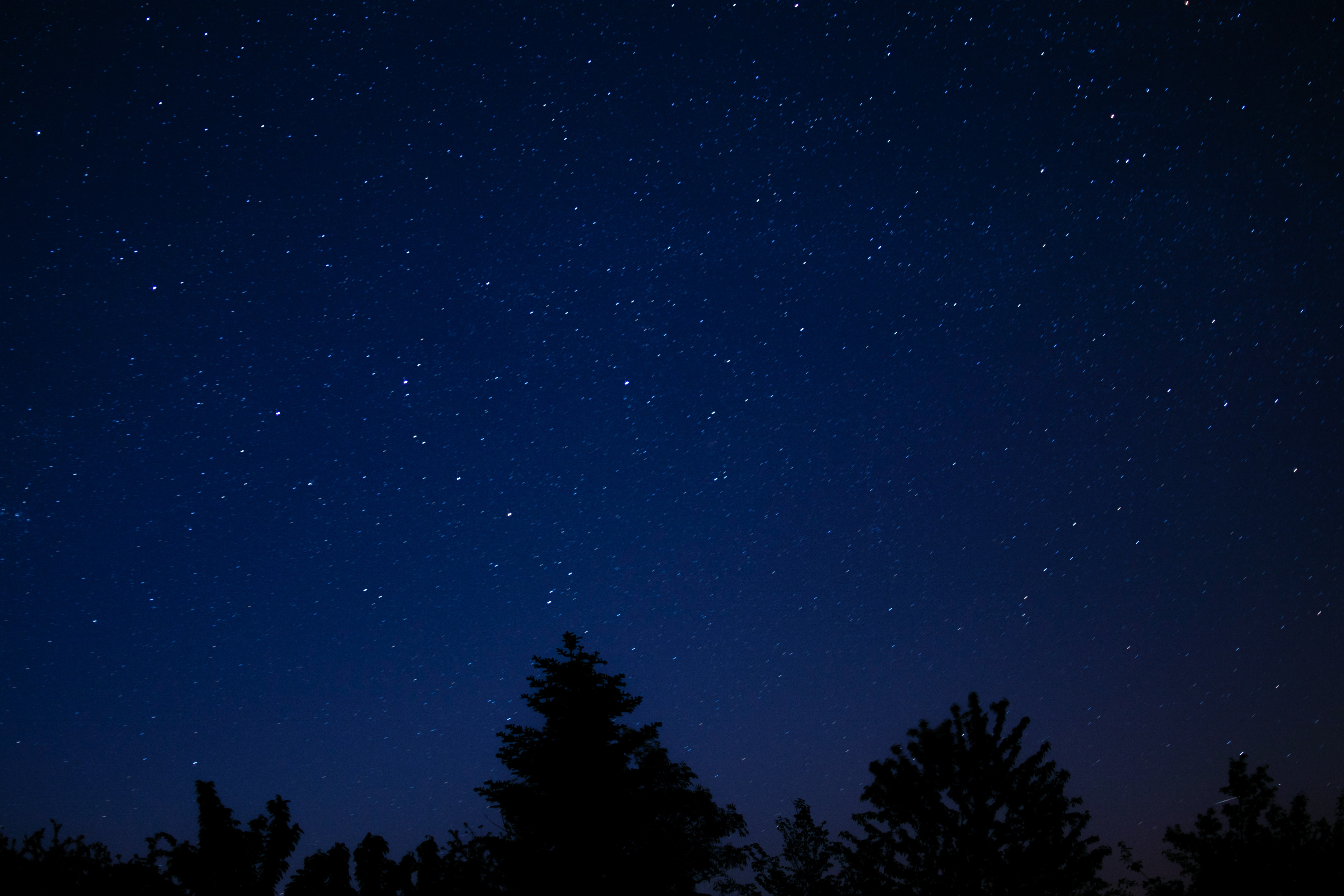 silhouette of trees under sky with stars
