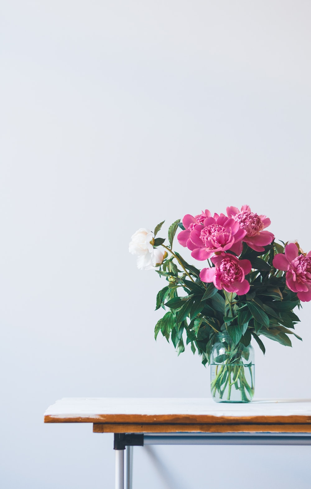 Minimal Floral Plant And Vase Hd Photo By Olia Gozha Olia On