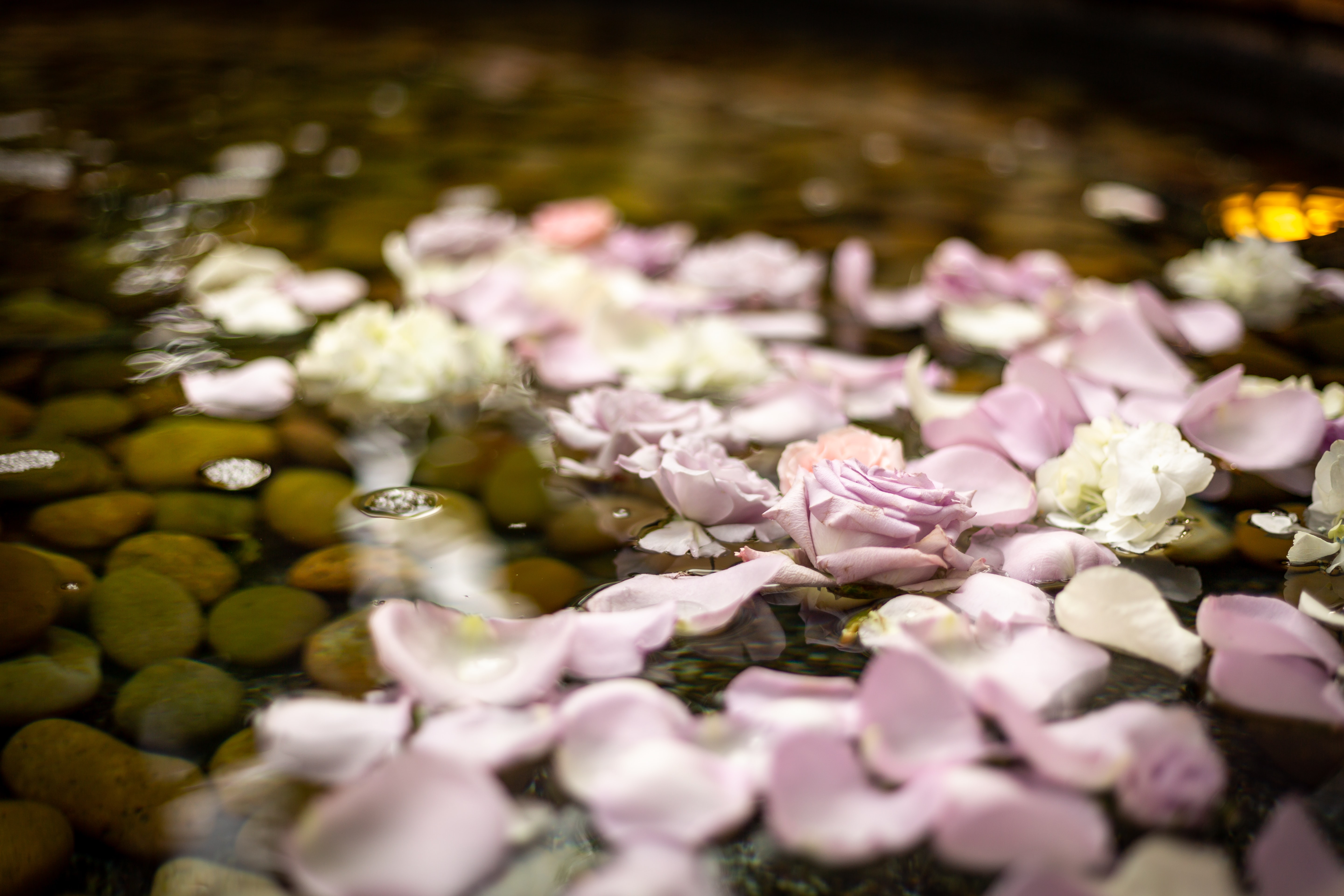 purple and white petals on water with rocks
