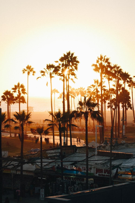 green palm trees near sea shore