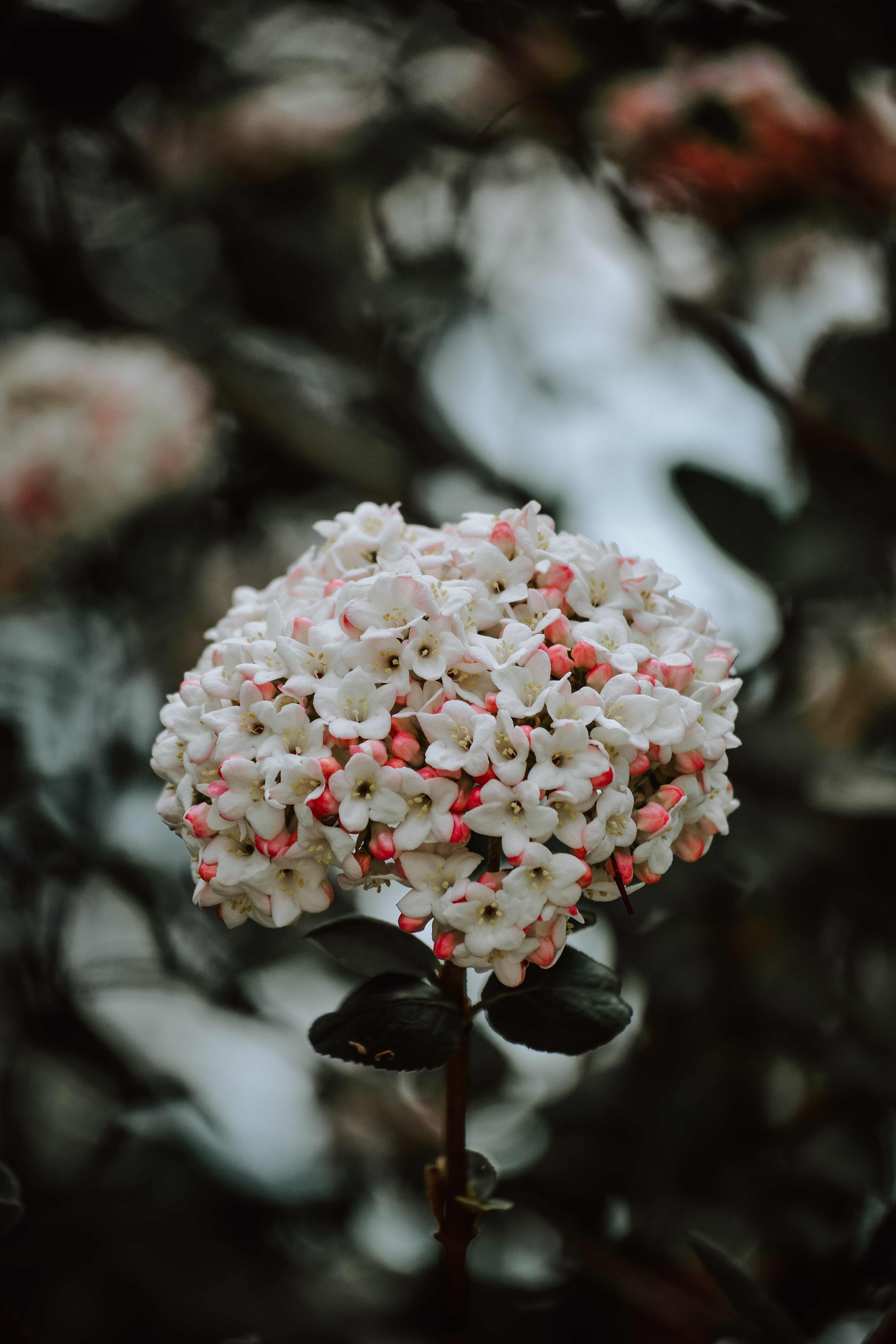 macro shot photography of white and pink flowers