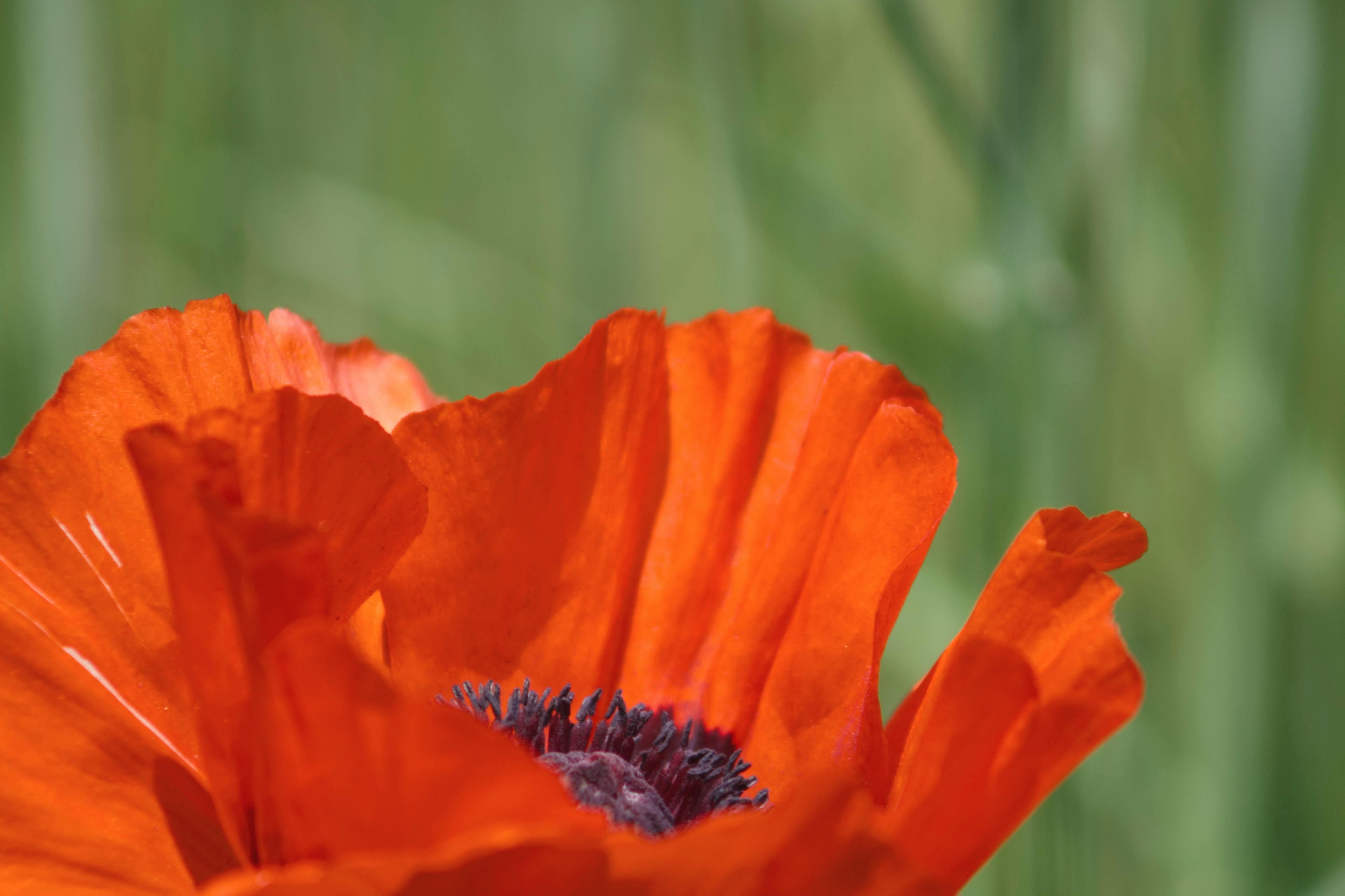 shallow shot of orange flowers