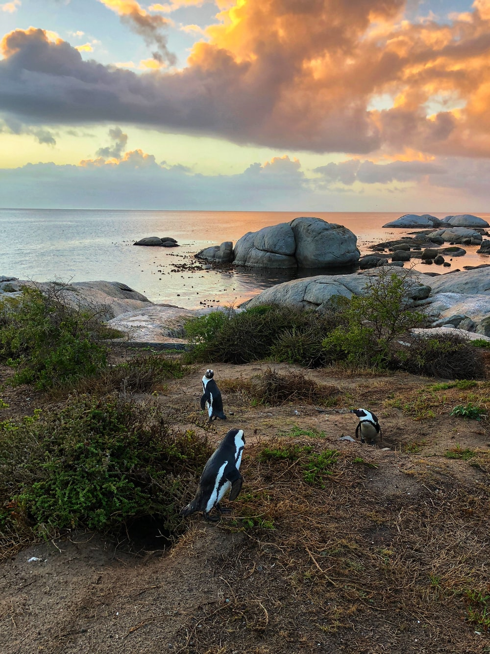 three penguins on grass field near body of water