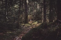 photo of forest trail during daytime