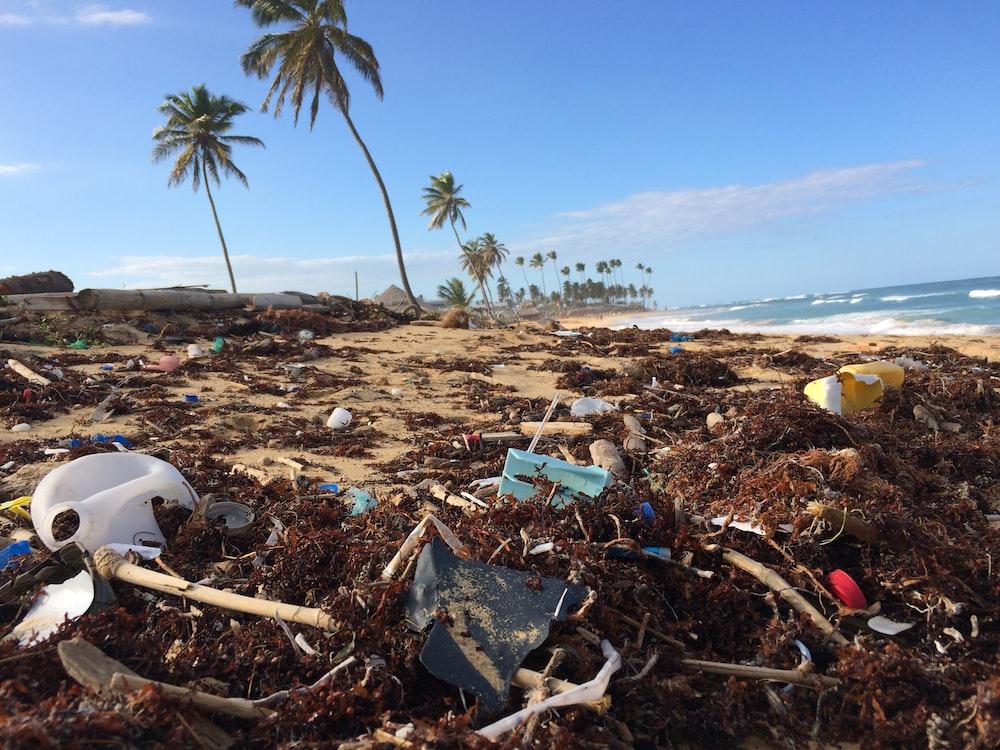 photo of coconut tree near seashore